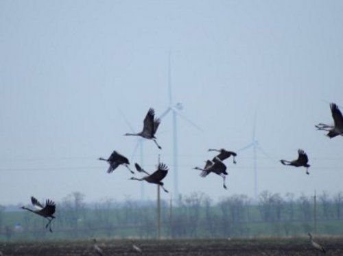 Protecting the bird population and fighting climate change – the key areas of DTEK Renewables eco-programs